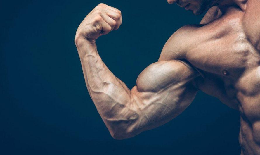 Risultati Deca Durabolin – Quali risultati aspettarsi dopo 1-12 settimane